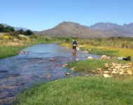 Rozwi collects invertebrates Berg River South Africa