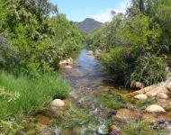 PRISTINE RIFFLE AT SANDDRIFSKLOOF RIVER, DE DOORNS