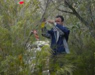 KARL RECORDING PHENOLOGICAL CHANGES OF RIPARIAN TREES, WESTERN CAPE