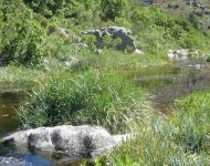 WCape Mountain Stream